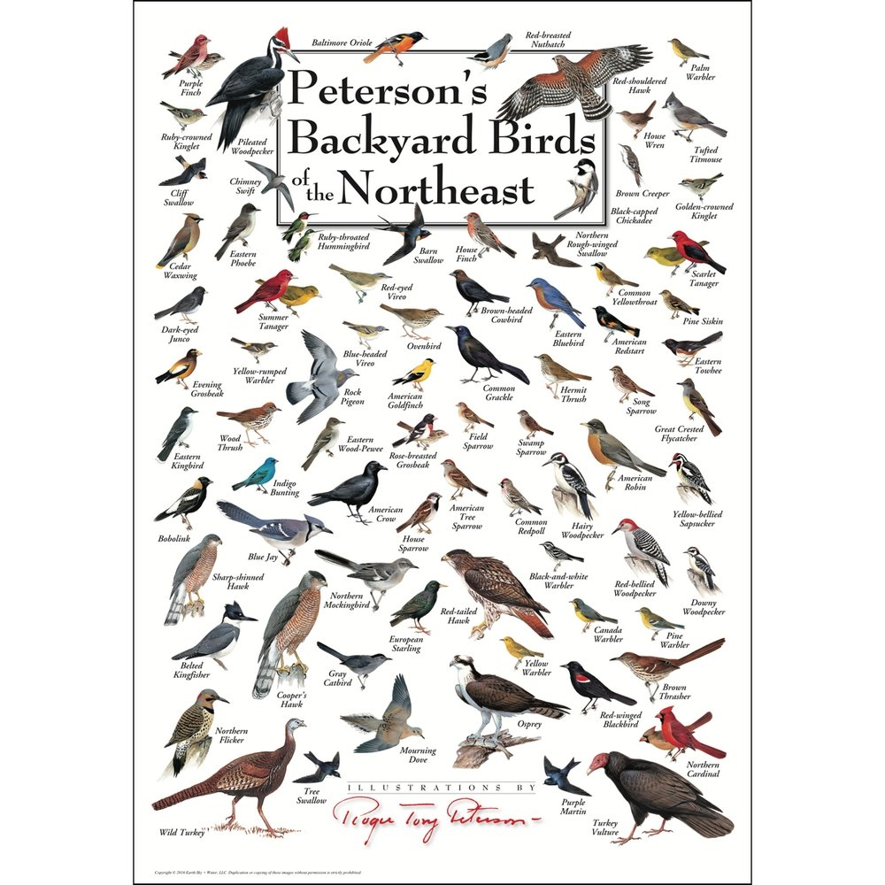 Peterson's Backyard Birds of the Northeast Poster