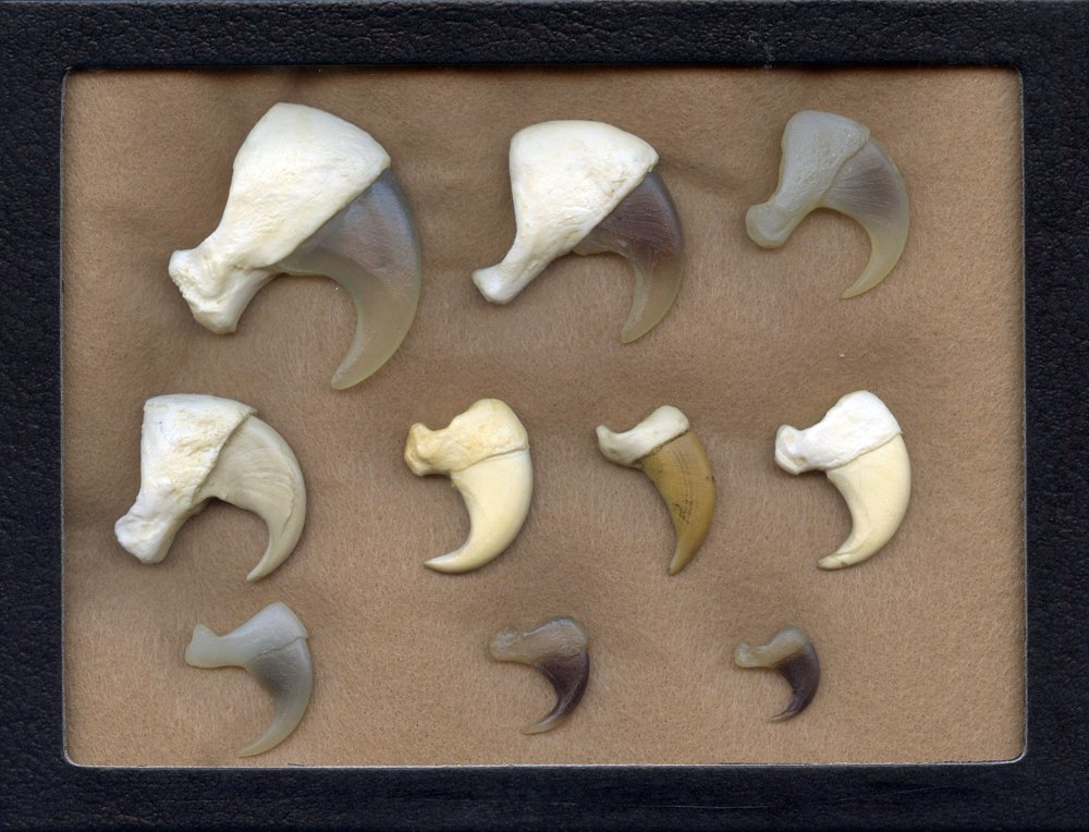 Cat Claws Display