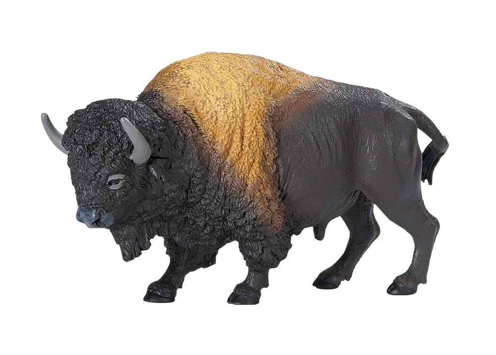 Bison Model