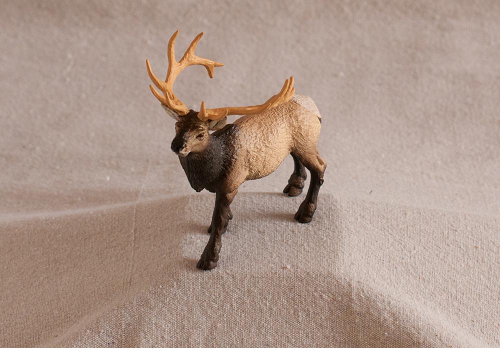 Elk (Bull) Model