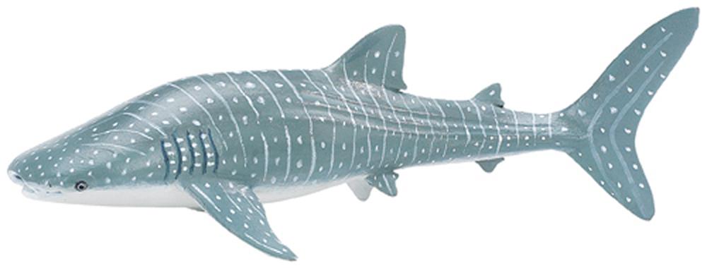 Shark (Whale) Model