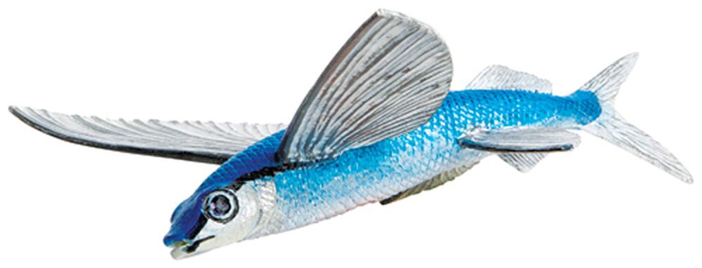 Flying Fish Model