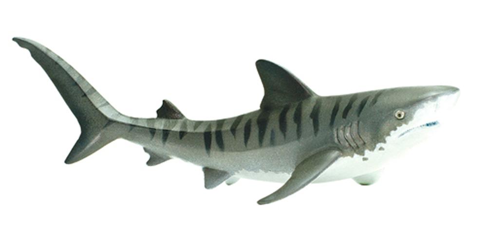 Shark (Tiger) Model