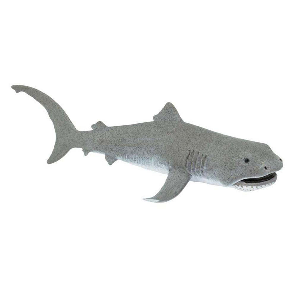 Shark (Megamouth) Model