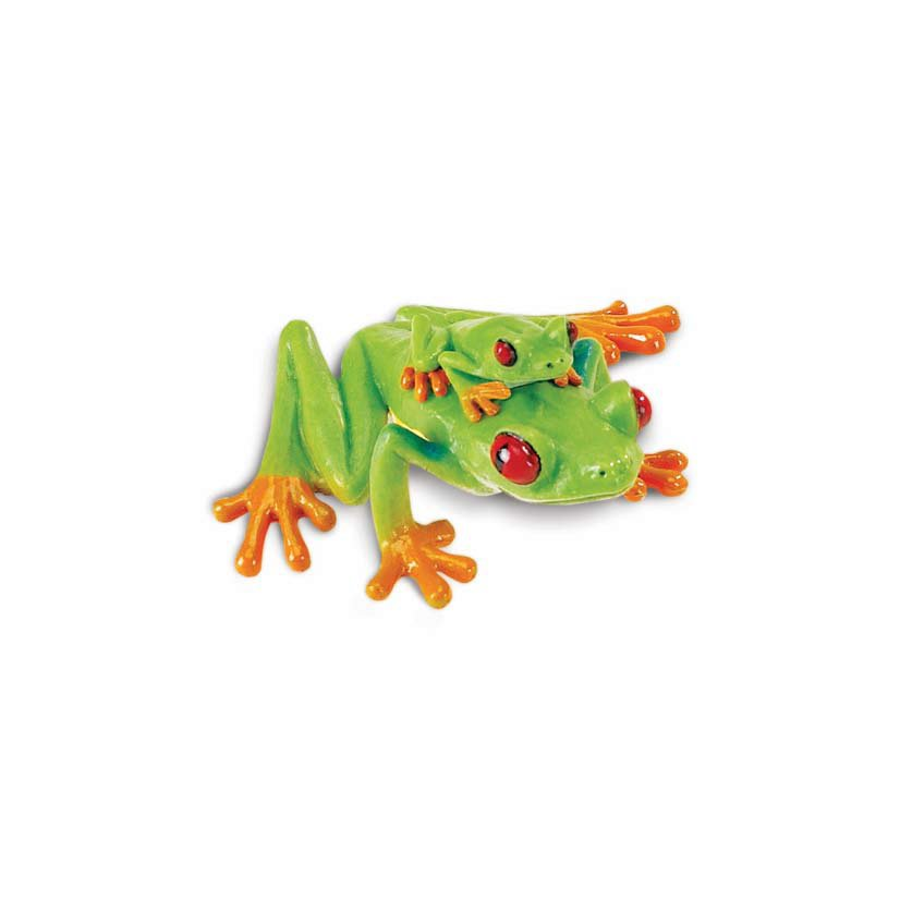 Tree Frog (Red-Eyed)  Model