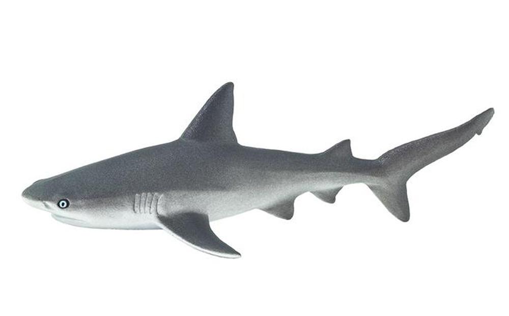 Shark (Gray Reef) Model