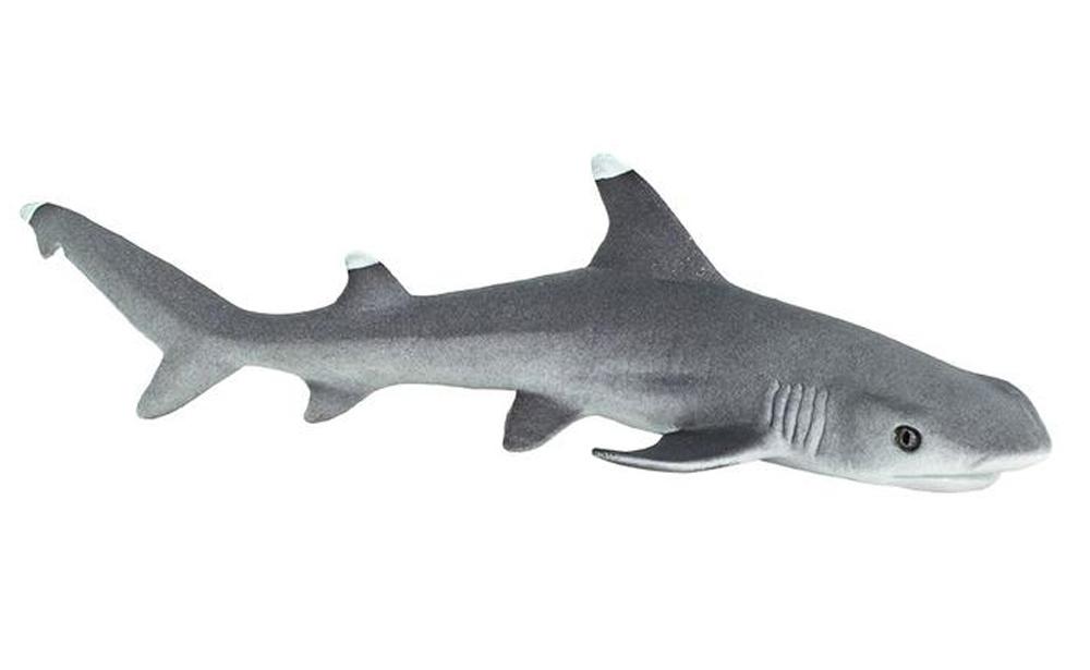 Shark (Whitetip Reef) Model