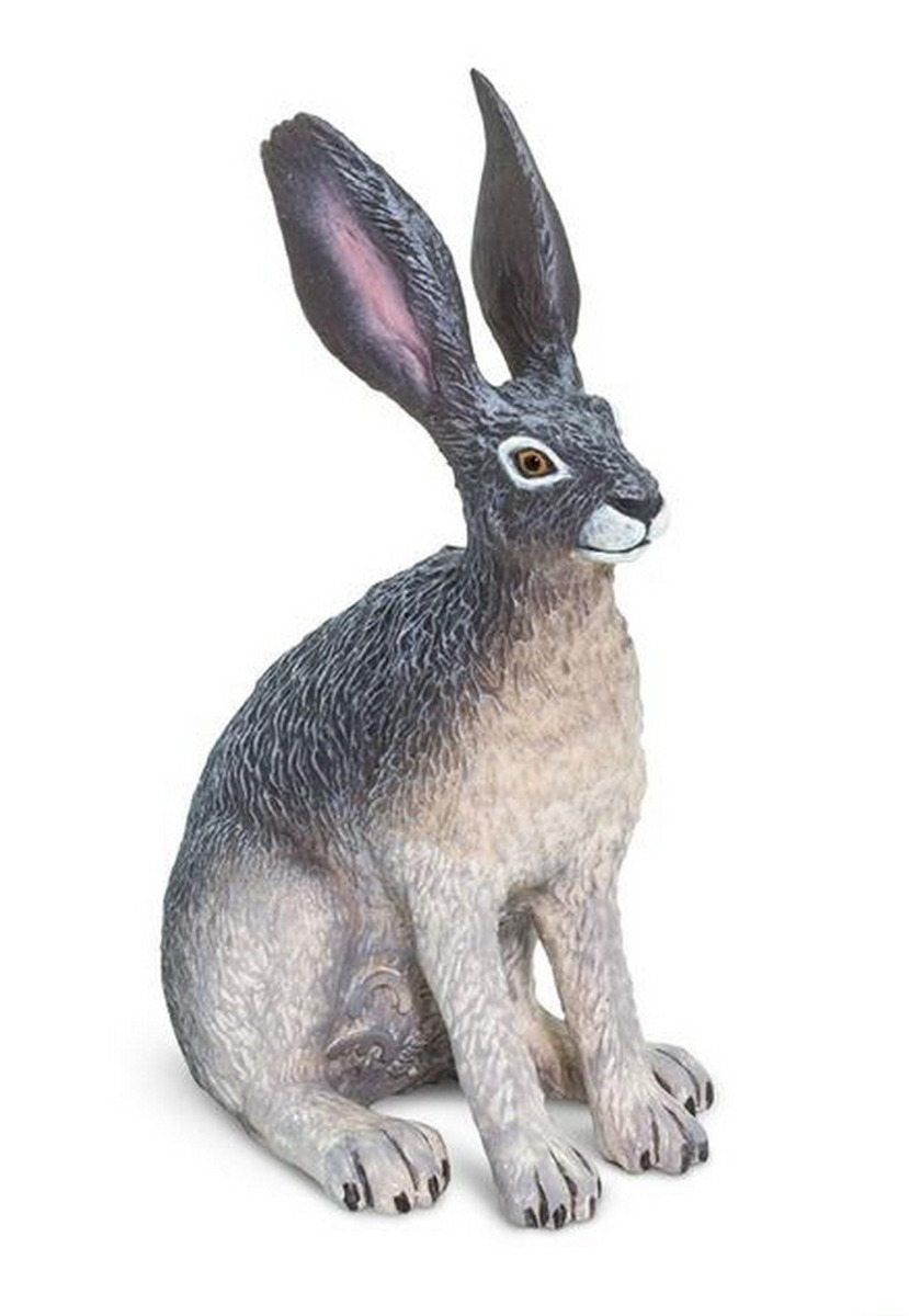 Hare (Desert) or Rabbit (Jack) Model