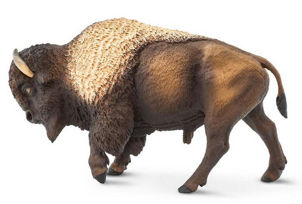 Bison Model (2019)