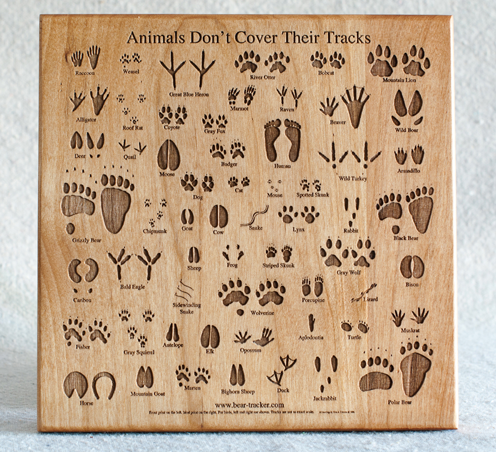 Animal Track Wooden Plaque (Medium)