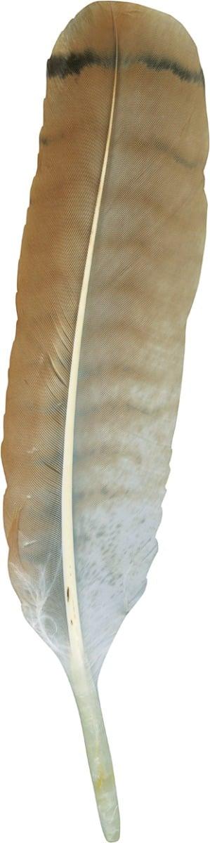 North American Bird Feather Replicas Set Birds Of Prey I