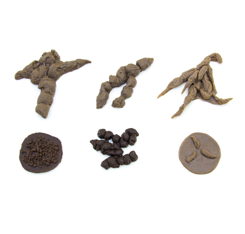 Carnivore/Insectivore ScatCast® Replica Selection (Discounted Set of 6 Replicas)