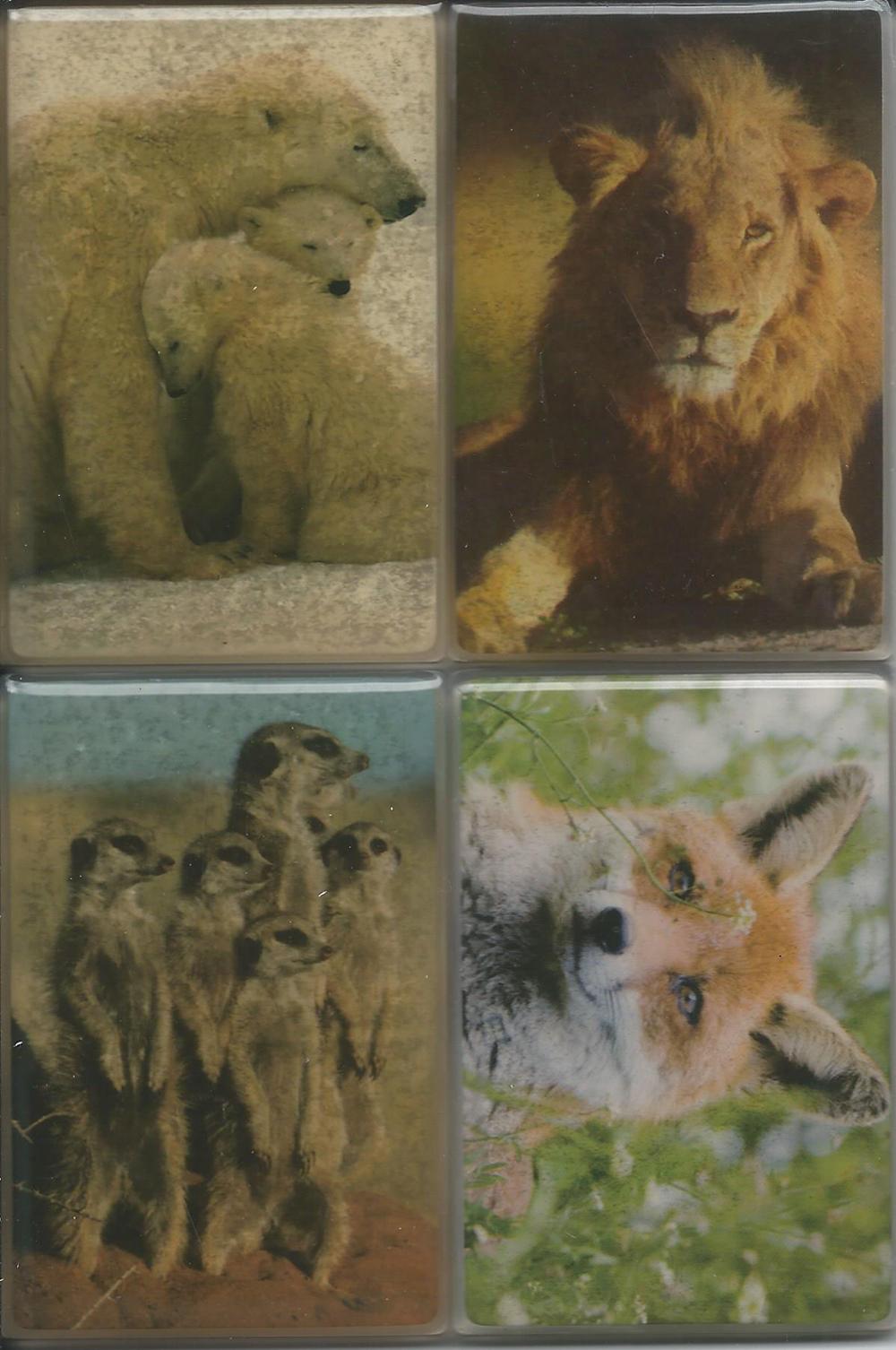Animal Photo Magnets (Set of 4)