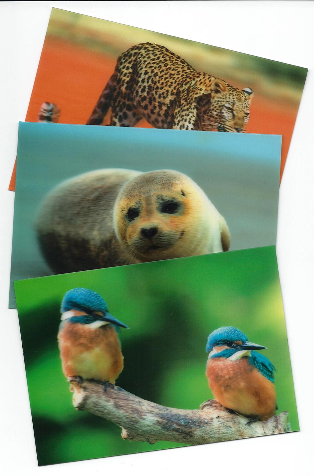 3-D Image Postcards (Set of 5)