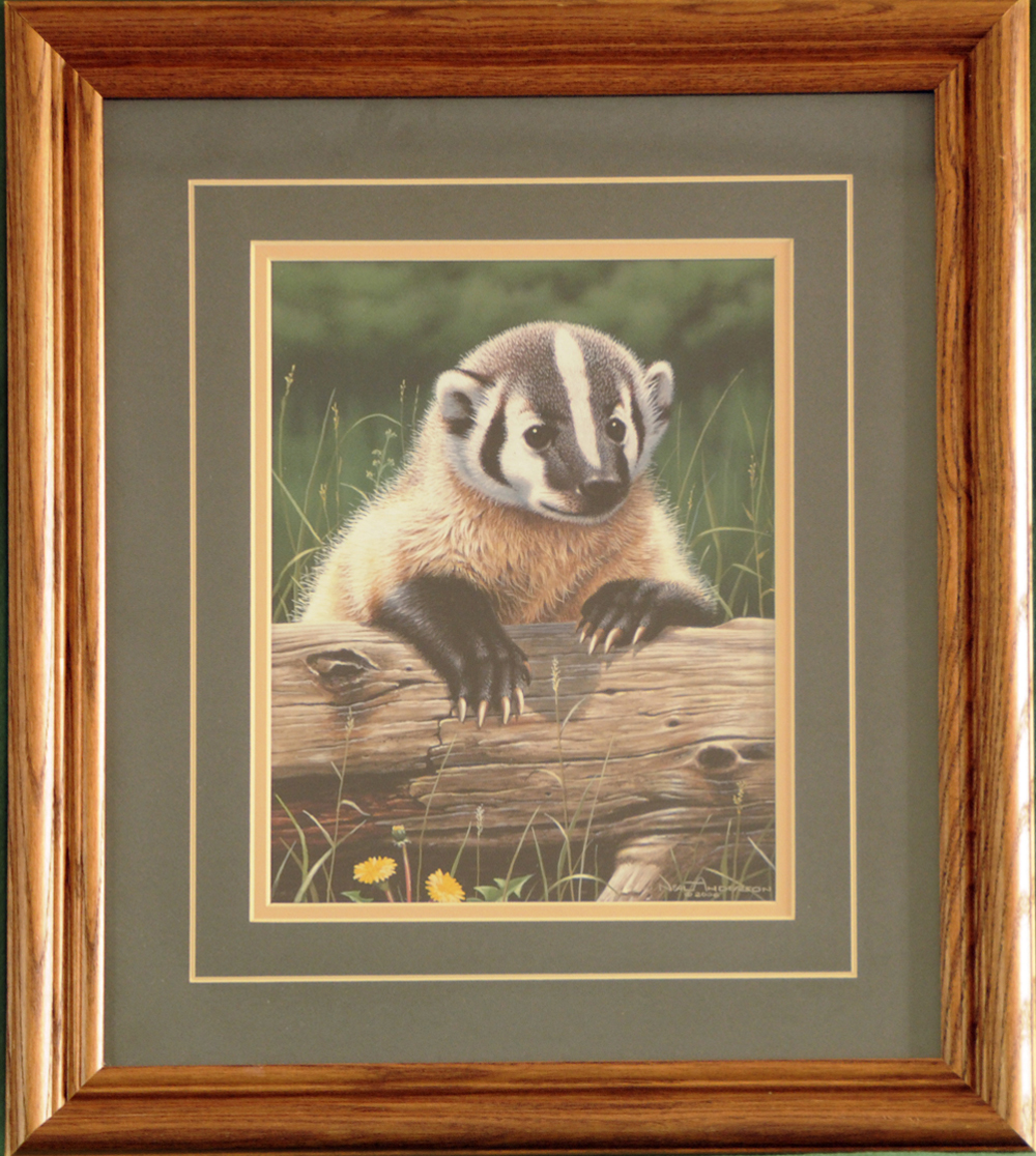 """Badger """"Out of the Meadow"""" Framed Print"""
