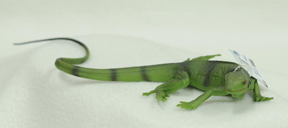 Iguana (Baby) Model