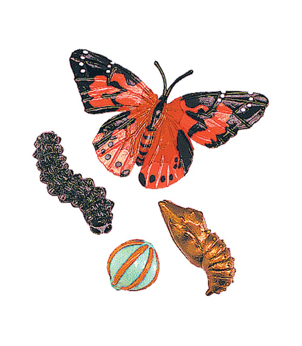 Painted Lady Butterfly Life Cycle Models Set