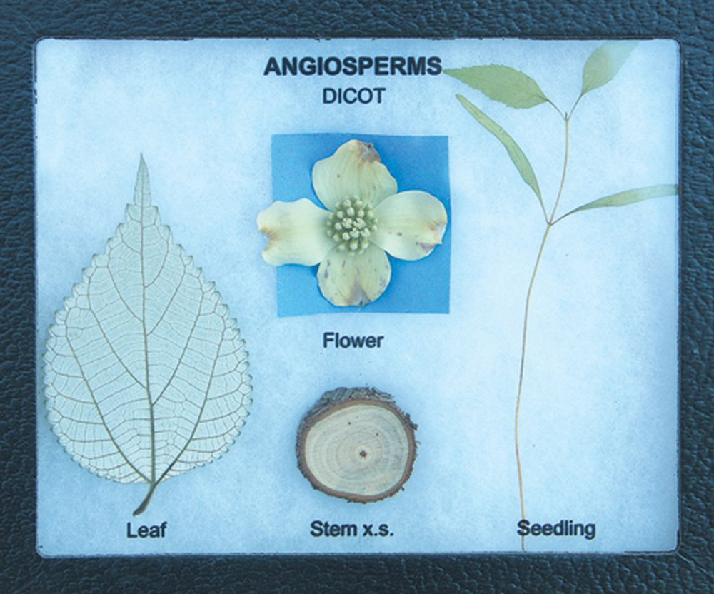 Plant Kingdom Survey Display Set