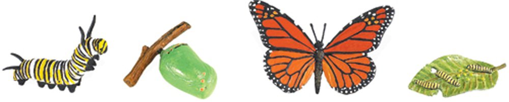 Monarch Butterfly Life Cycle Models Set