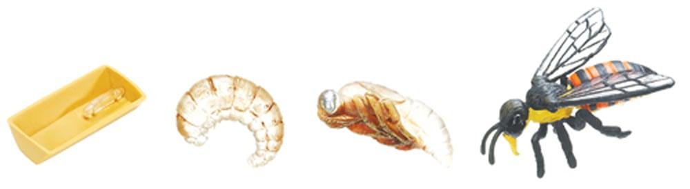 Honey Bee Life Cycle Models Set