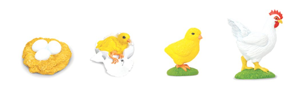 Chicken Life Cycle Models Set