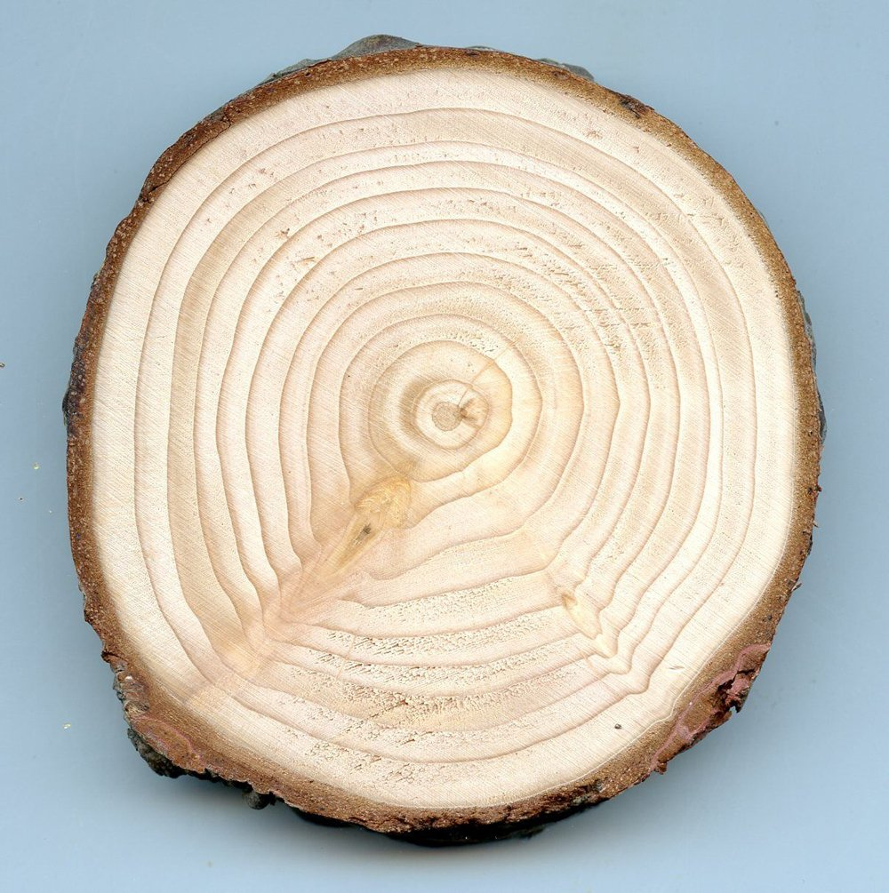 Fir (Red) Tree Round