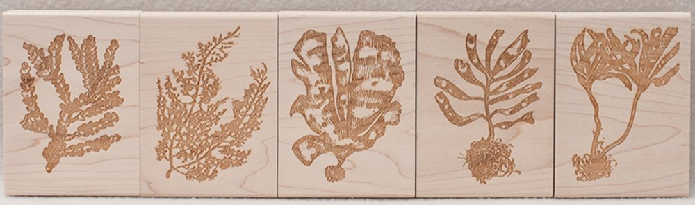 Marine Algae Rubber Stamp Collection (Discounted Set of 5 Stamps)