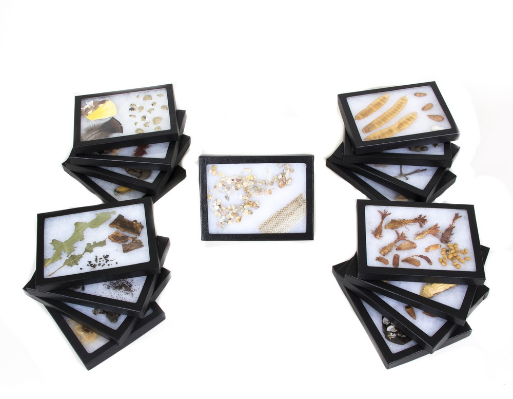 Animal Signatures® Display Collection (Discounted Set of 17 Displays)