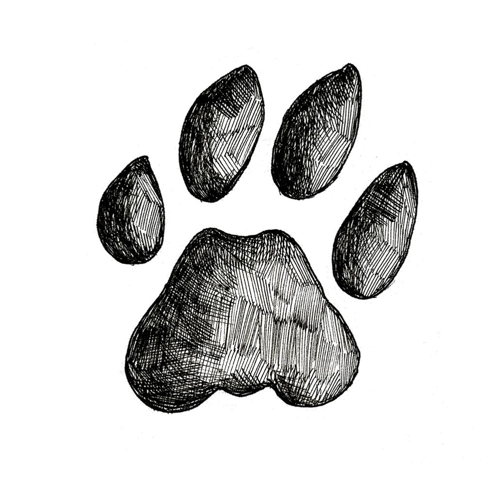 Bobcat Track Stamp (Front Left Foot)