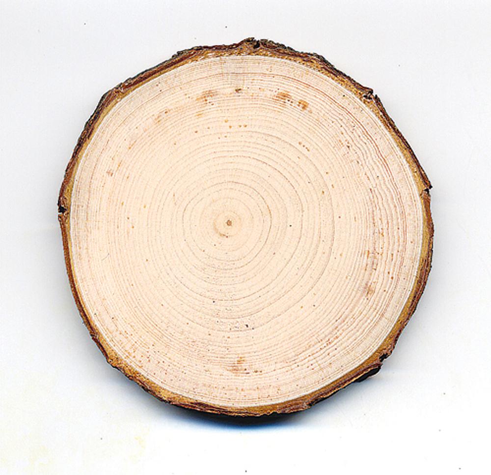 Pine (White) Tree Round
