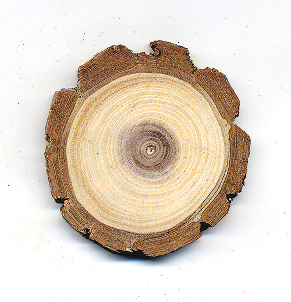 Walnut (Black) Tree Round