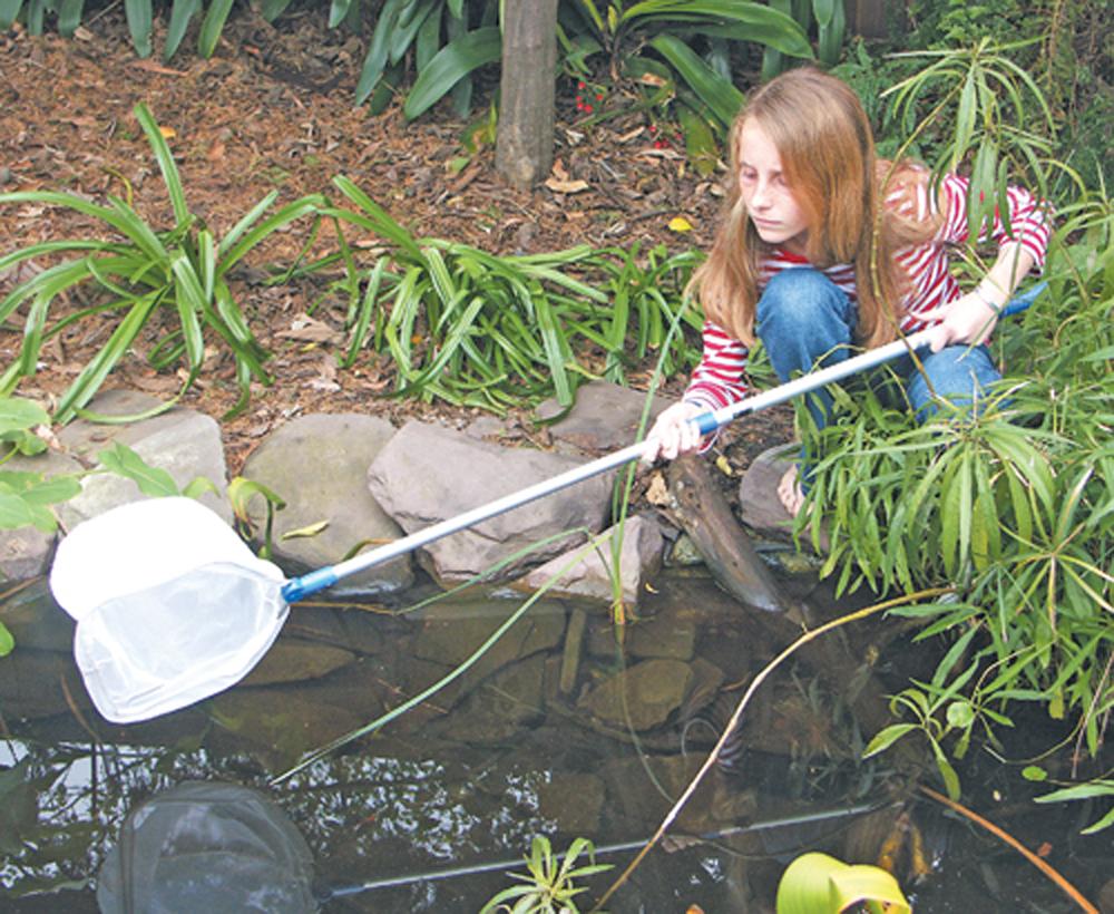 Vertebrate (Medium Mesh) Extendable Aquatic Net