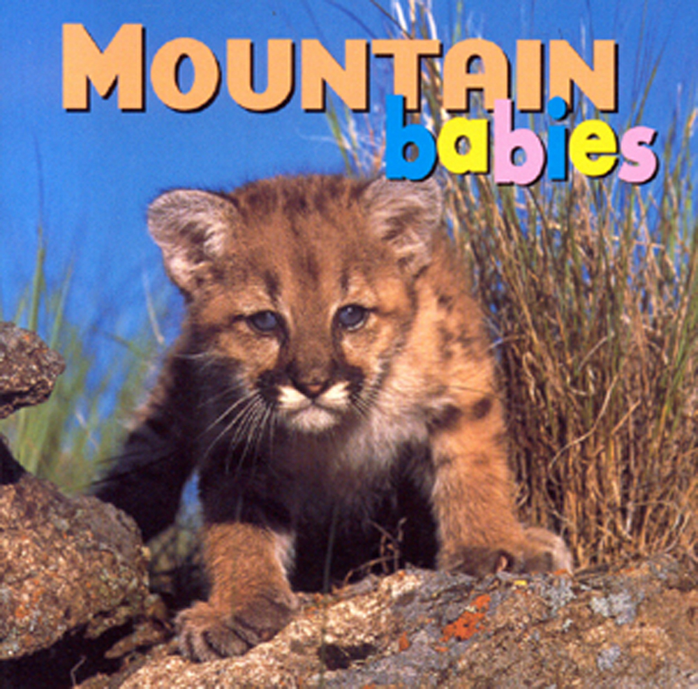 Mountain Babies (Board Book)