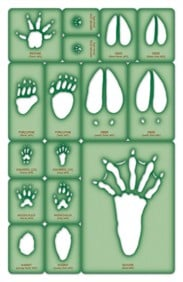 ANIMAL TRACKING: Trace-A-Track® Templates